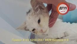 Обновление новостей о состоянии здоровья котенка Фили, которого разодрала собака.