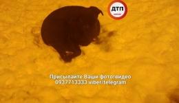 Киев, пропала собака. 11.02.2018