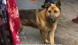 Киев, нашли собаку. Может, кто-то хочет себе друга? 16.02.2018