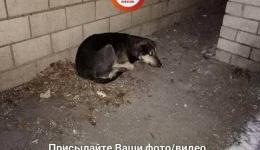 Киев, давайте не будем безсердечными и спасём от холода щенка! 25.01.2018