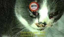 Избитый кот Нариман. Сбор средств